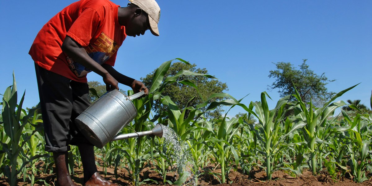 African_Farmer_watering_maize_1200x600