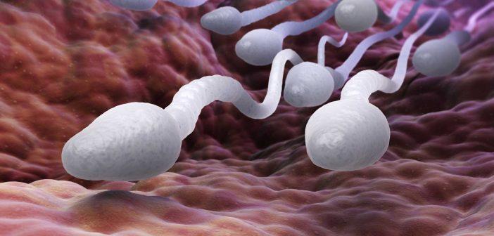 sperm-web-702x336