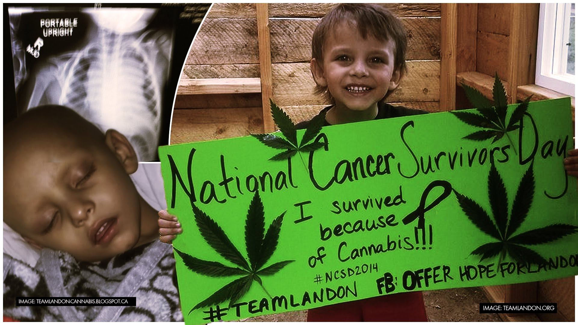 Cannabis Oil Cures Cancer: Boy(3) Who Had 2 Days To Live! image from YouTube