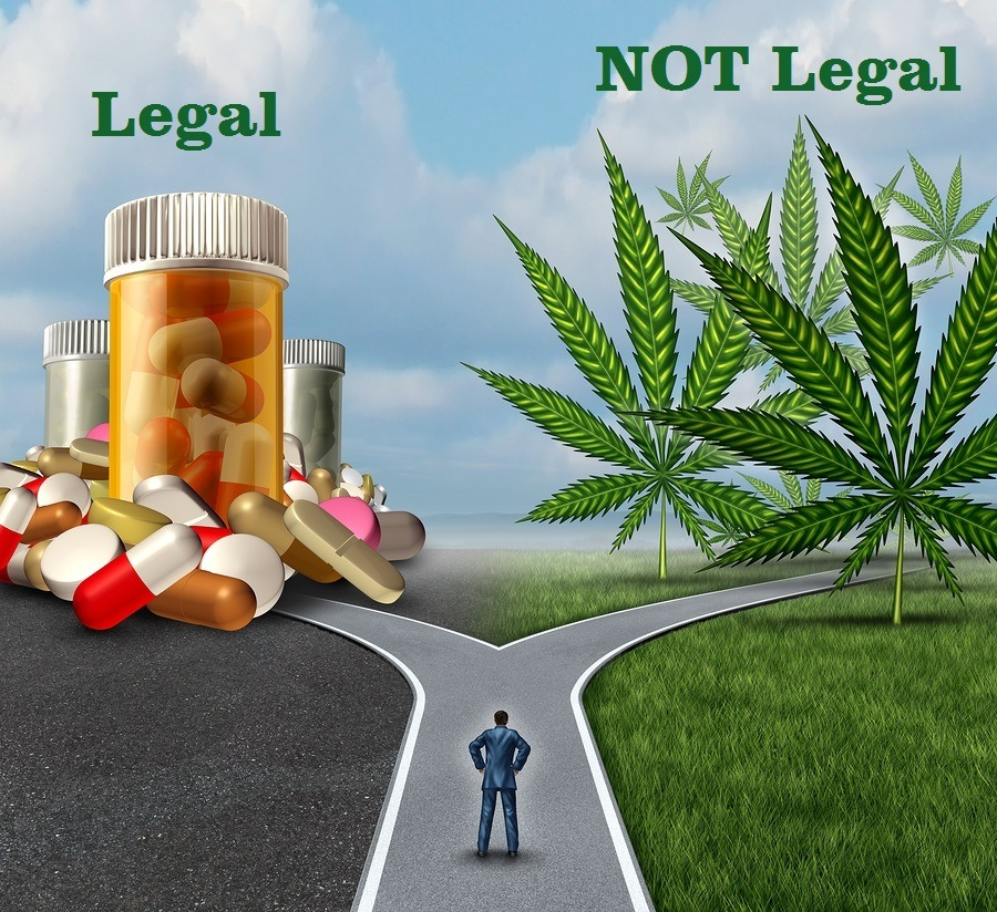 Marijuana medical choice dilemma health care concept as a person standing in front of two paths with one offering pharmaceutical drugs and the other option with cannabis.