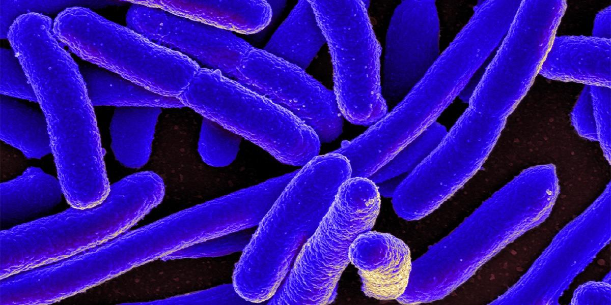 E_coli_Bacteria_1200x600