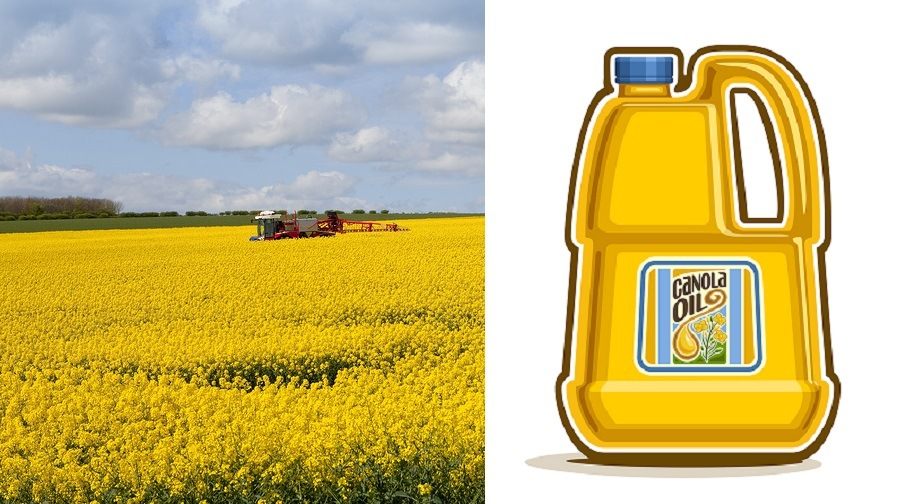a red crop sprayer amongst the yellow flowers of an oilseed rape crop under a blue cloudy sky in springtime
