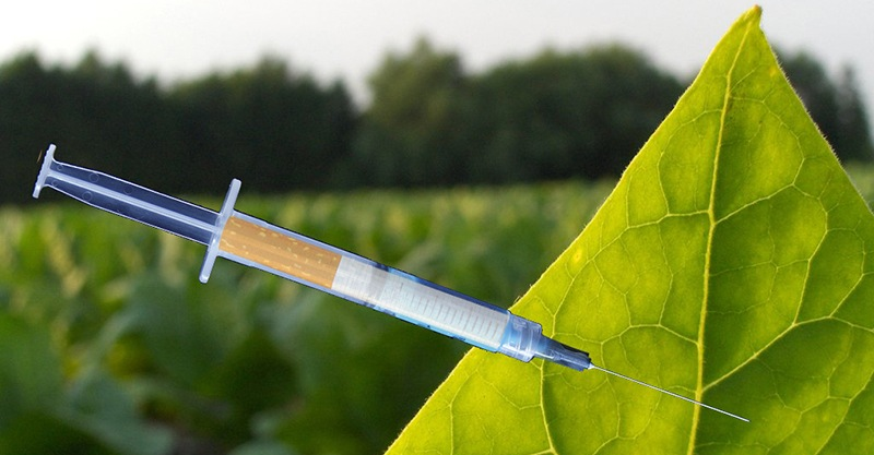 02-07-Tobacco-leaf_Vaccine_Featured_Image