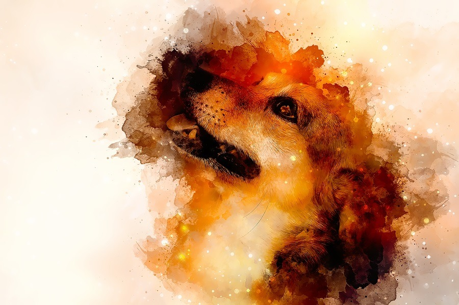 Dog and abstract background, Beautiful color spots structure