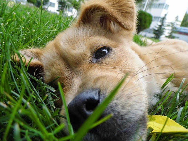 dog-in-grass