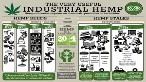 Cannabis and Hemp Gaining Legal Acceptance More Rapidly This Year