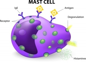 mast-cell-300x222