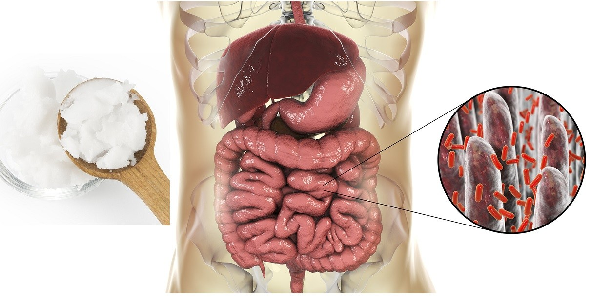 Intestinal Microbiome, Anatomy Of Human Digestive System And Clo