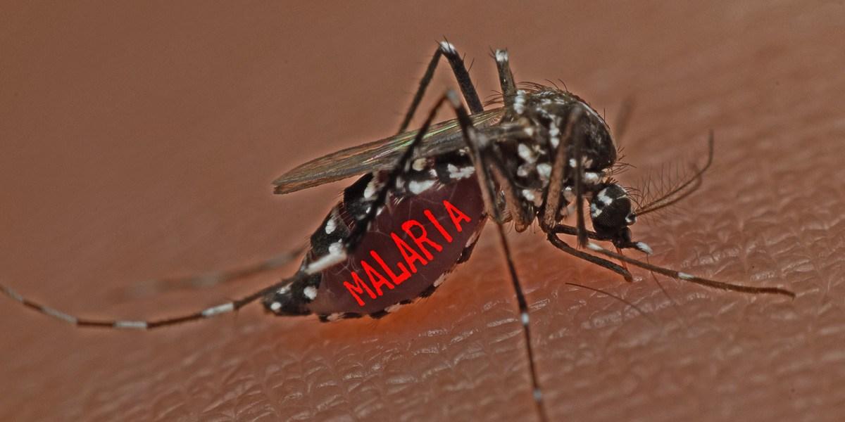 Malaria_mosquito_1200x600
