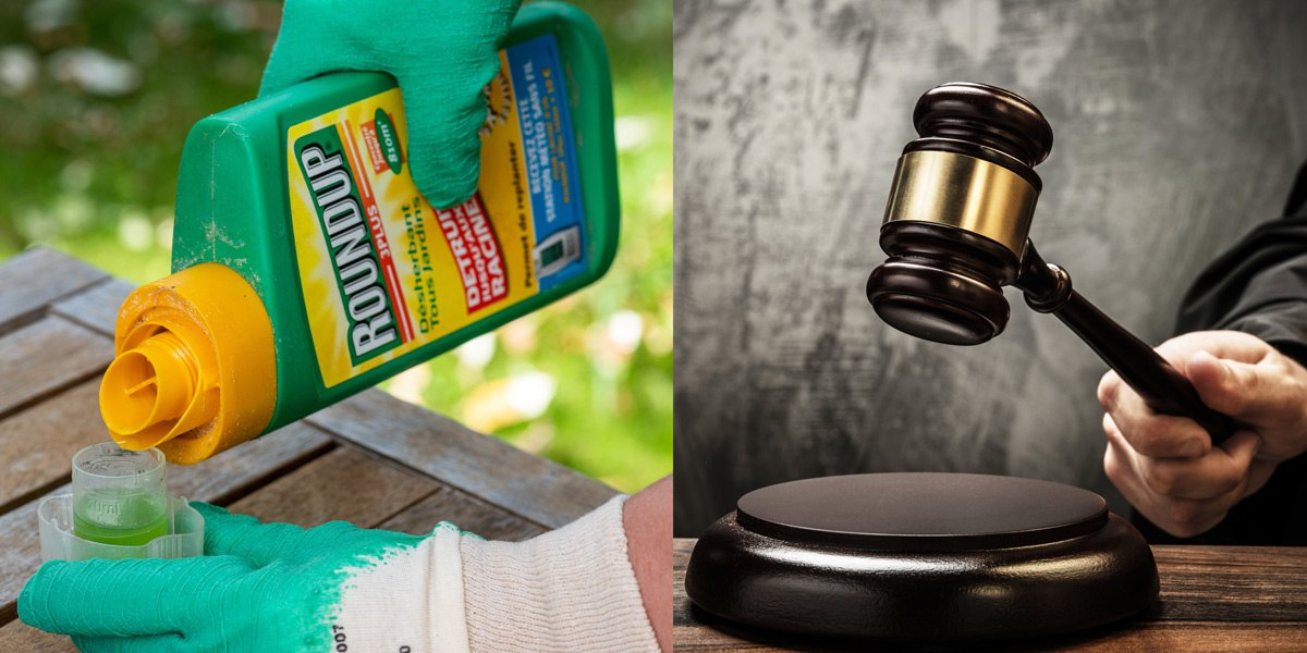 Roundup_herbicide_weedkiller_and_Judges_hammer_1200x600