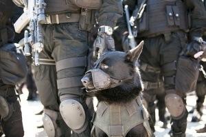Police-dog-300x200