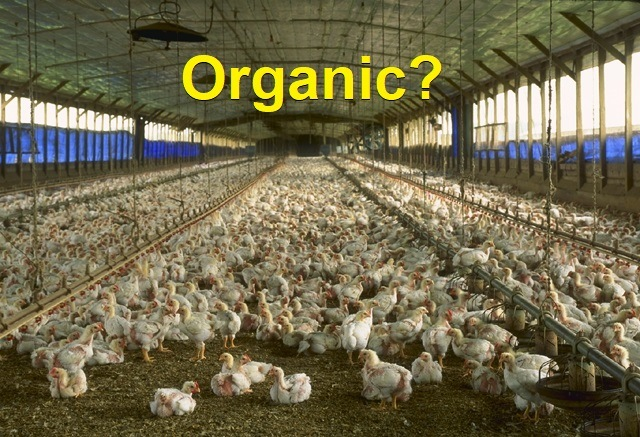 organic_chicken_house