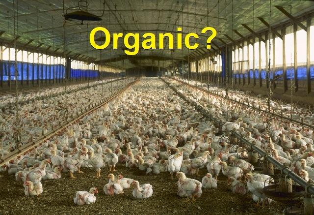 organic_chicken_house