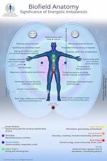 biofield anatomy