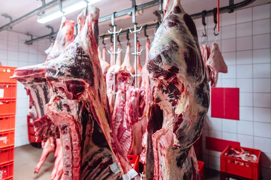 Pieces of beef meat in slaughterhouse of butchery waiting for fu